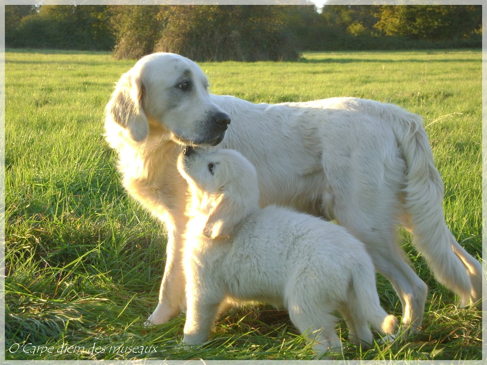 Gayla et son petit